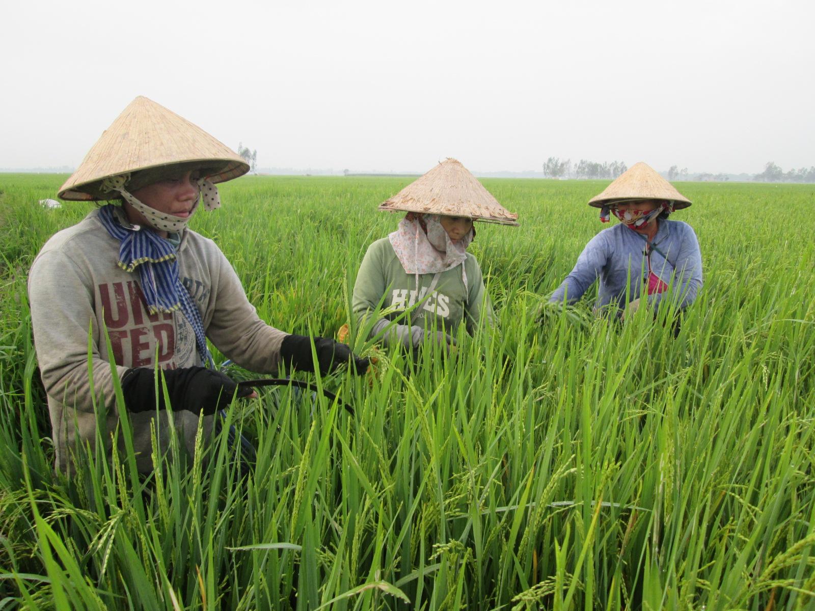 An Giang: Trên 68,8 tỷ đồng đổi mới phát triển hợp tác xã, tổ hợp tác nông nghiệp